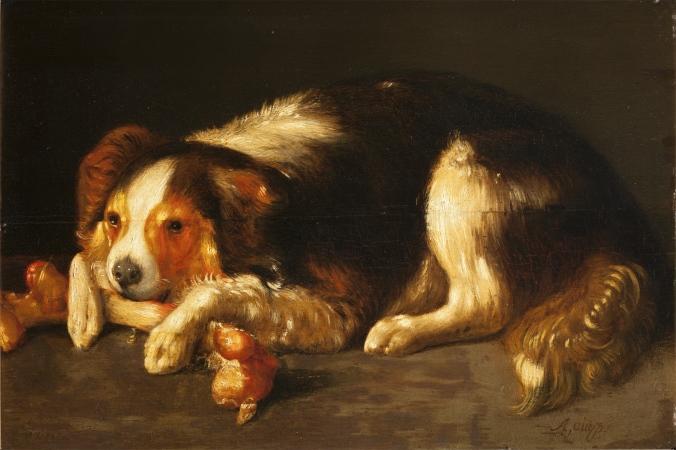 hond met bot
